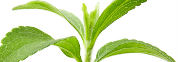 Stevia godkänt i EU