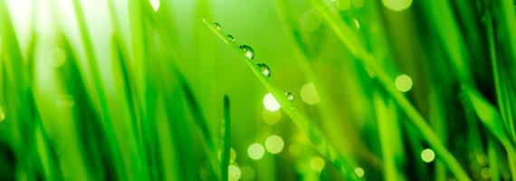 Vetegräs – ett komplett livsmedel