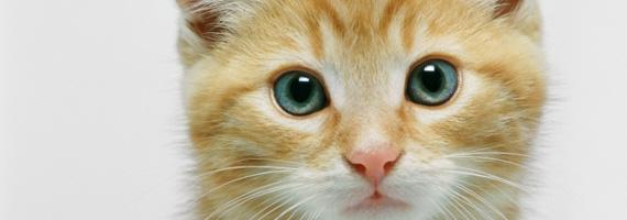Hälsofördelar med sällskapsdjur