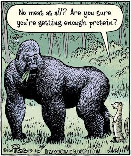 protein-vegetarian