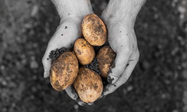 11 tips för billigare ekologisk mat